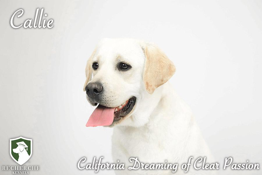 Callie3