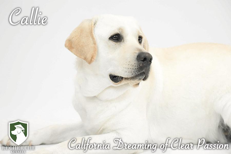 Callie4