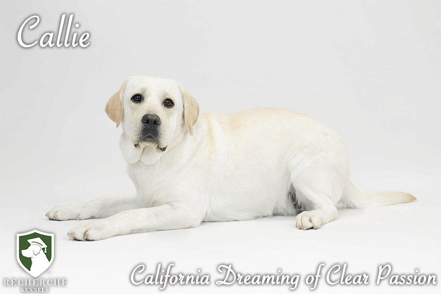 Callie6