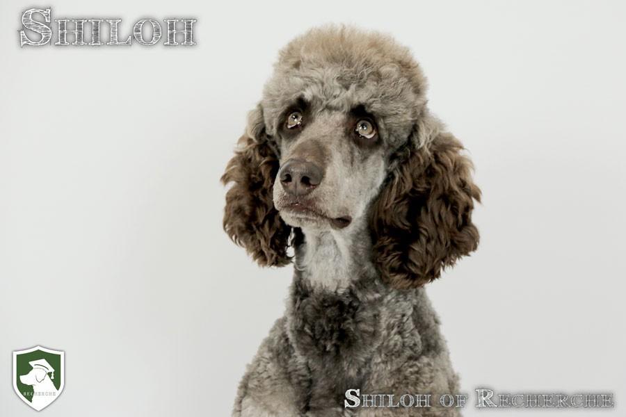 Shiloh-21