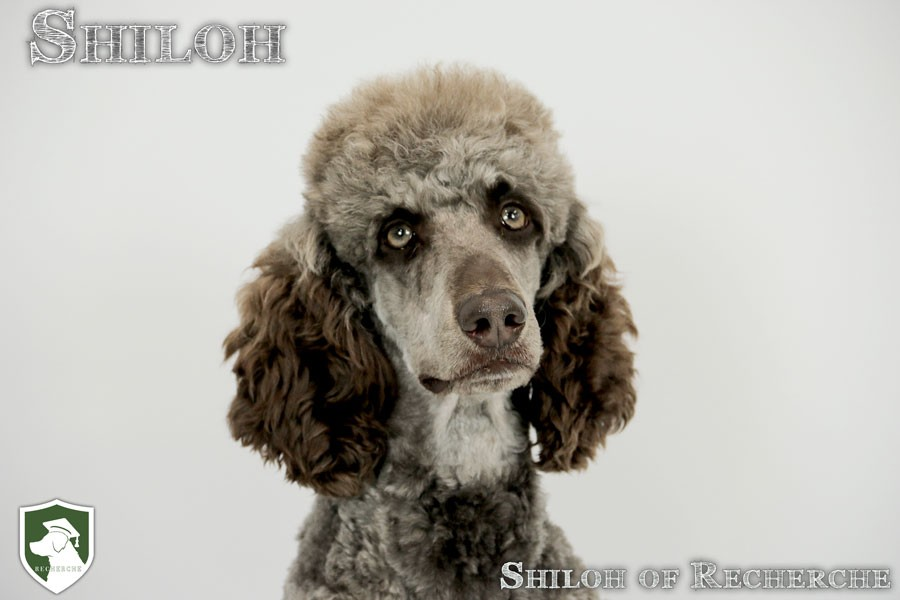 Shiloh-24