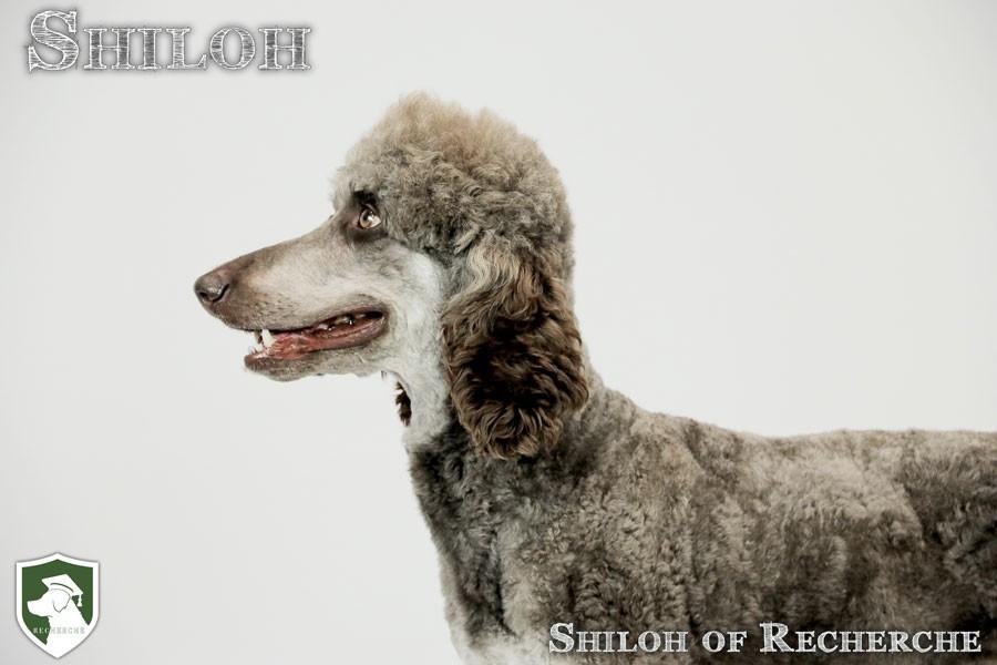 Shiloh-38