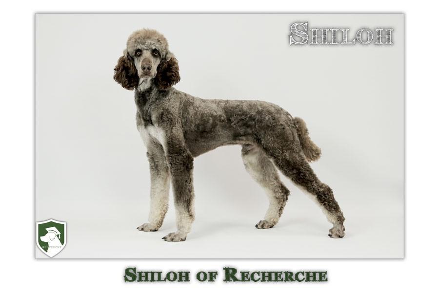 Shiloh-47