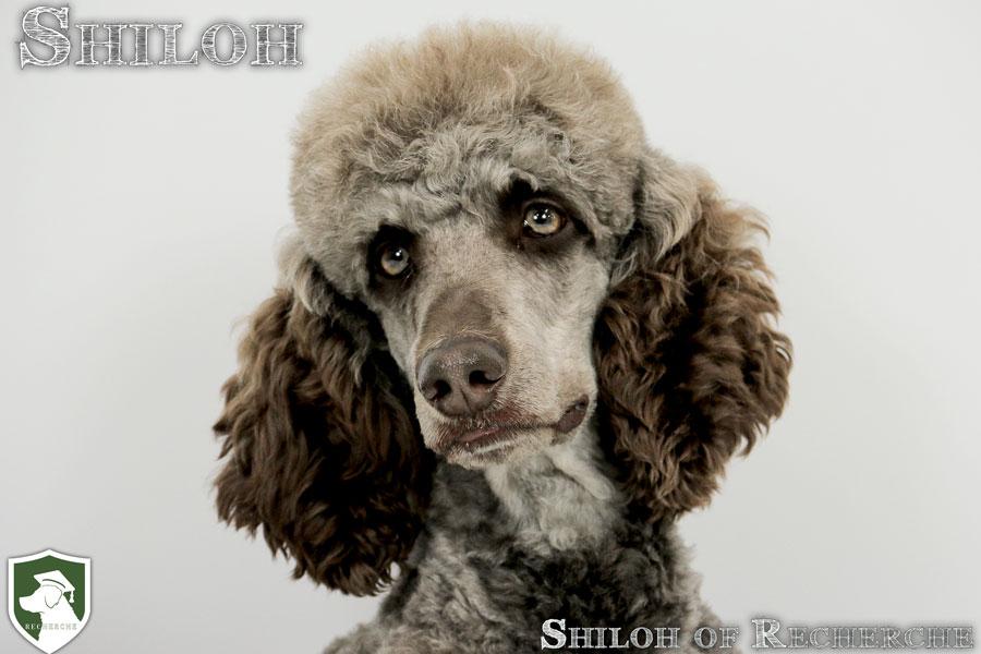Shiloh-5
