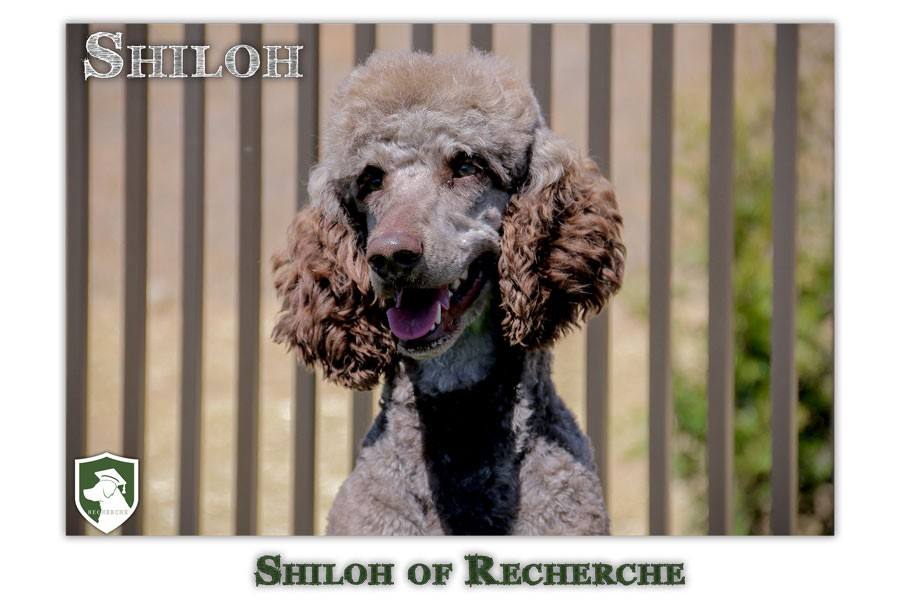 Shiloh-82