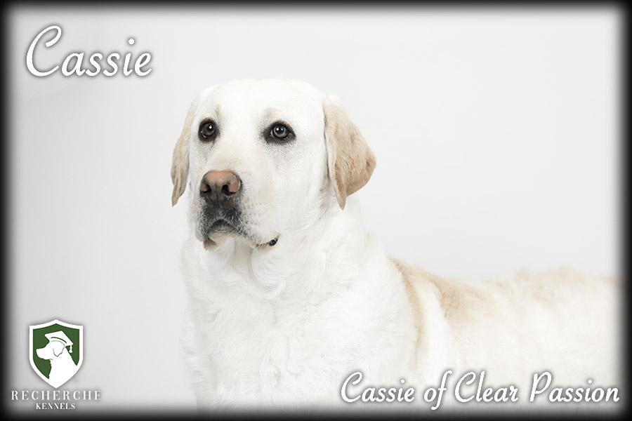 1Cassie