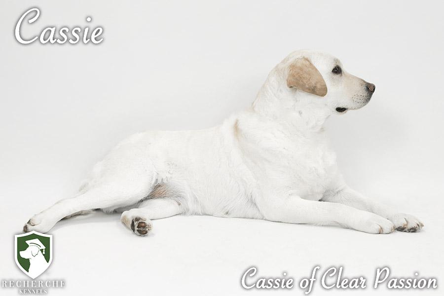 Cassie1