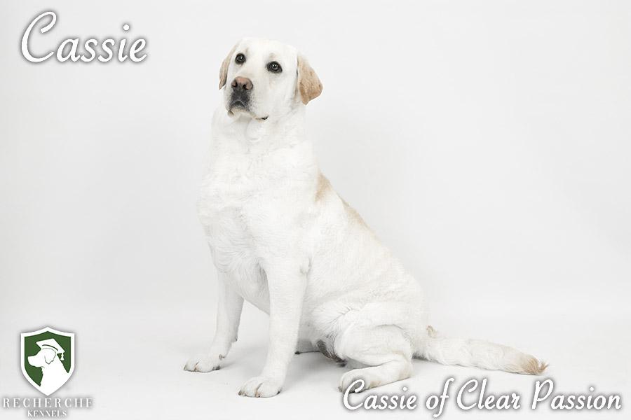 Cassie11
