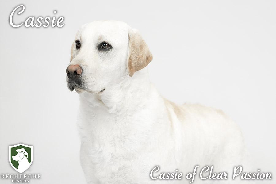 Cassie12