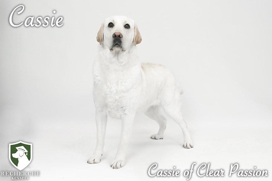 Cassie13