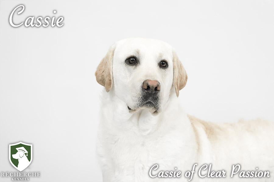 Cassie14