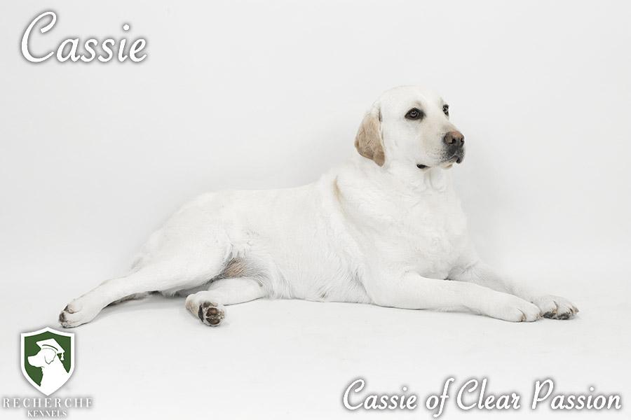 Cassie2