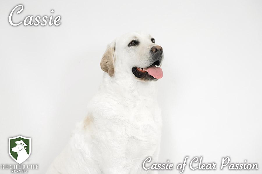 Cassie3