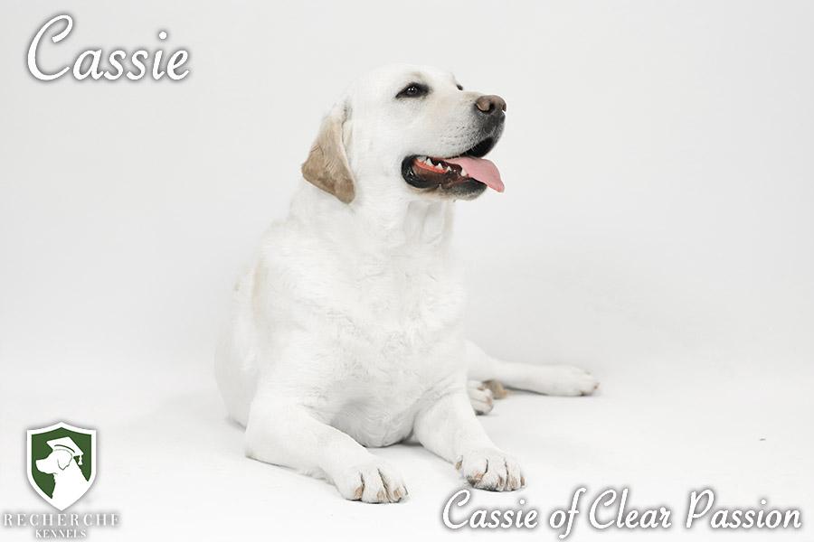 Cassie5