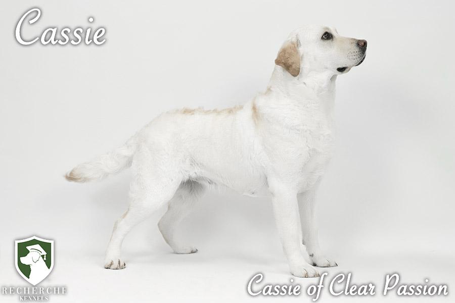 Cassie6