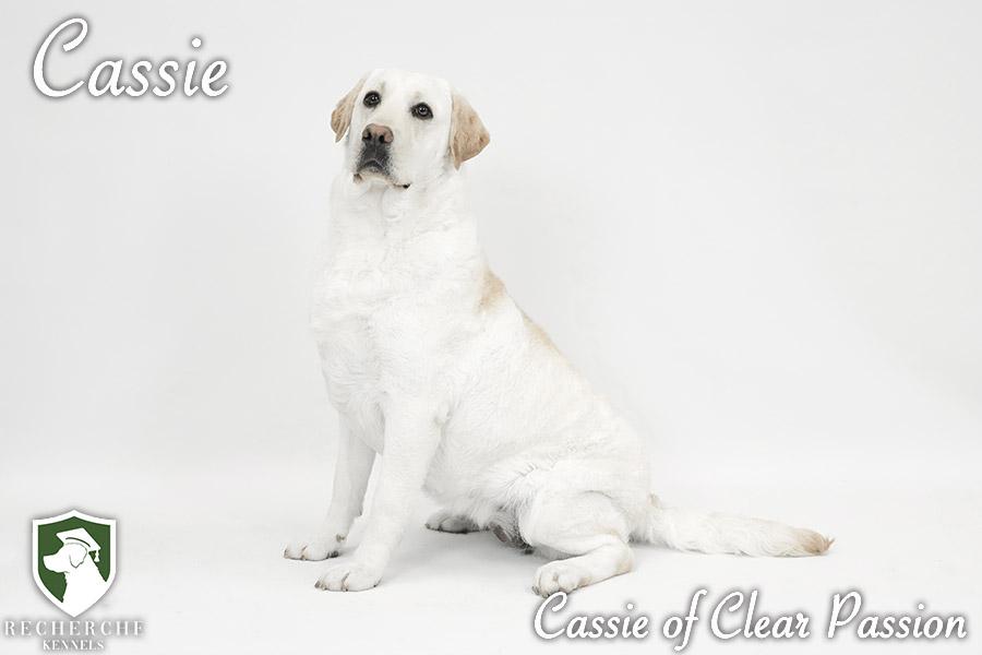 Cassie7