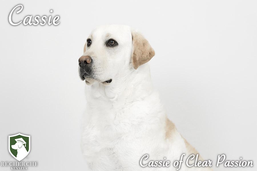 Cassie8