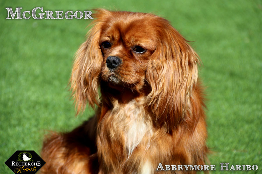 McGregor_Mar18_2994