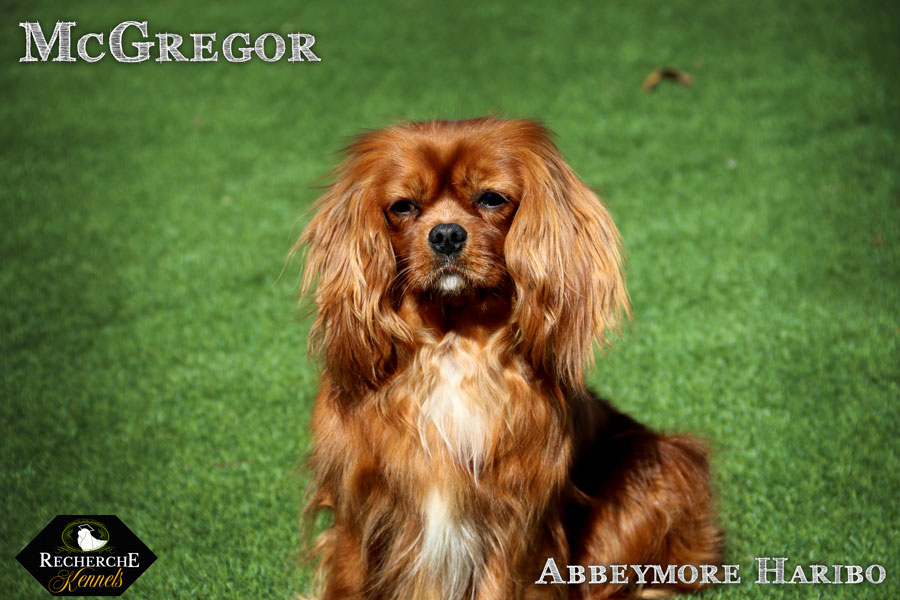McGregor_Mar18_2997