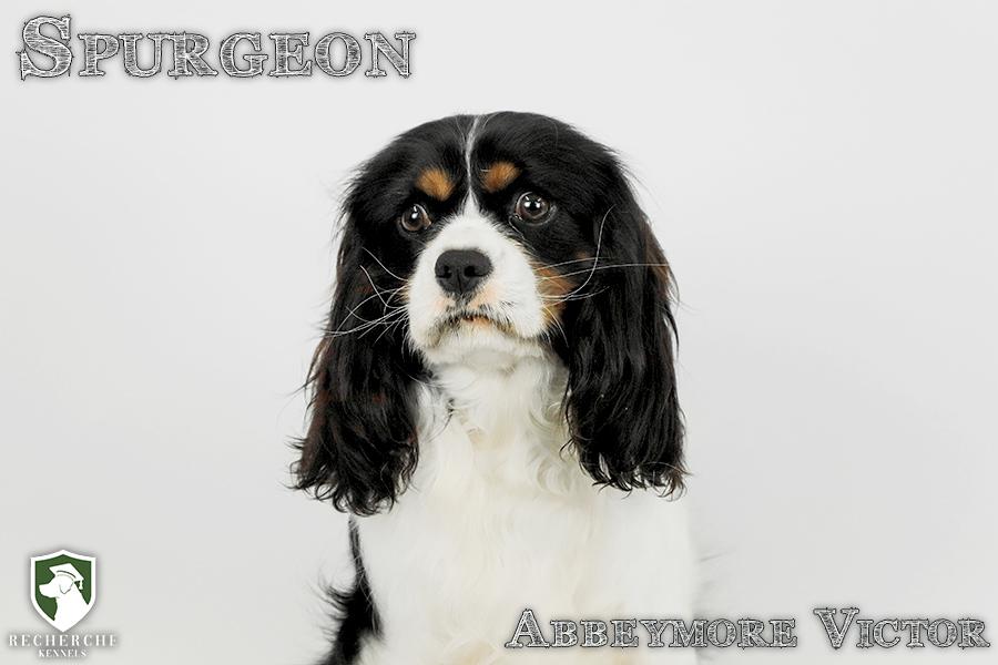 Spurgeon14