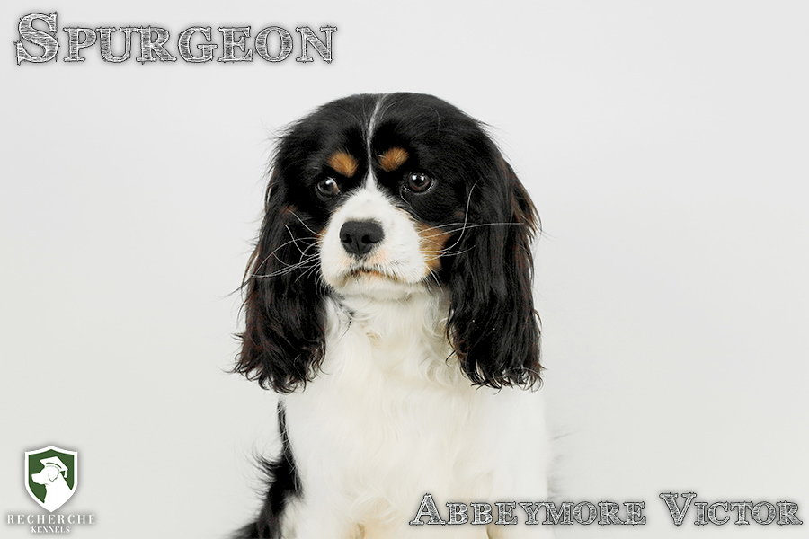 Spurgeon15