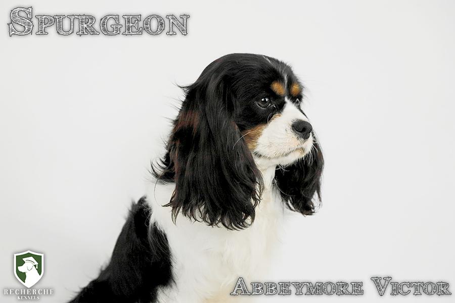 Spurgeon17