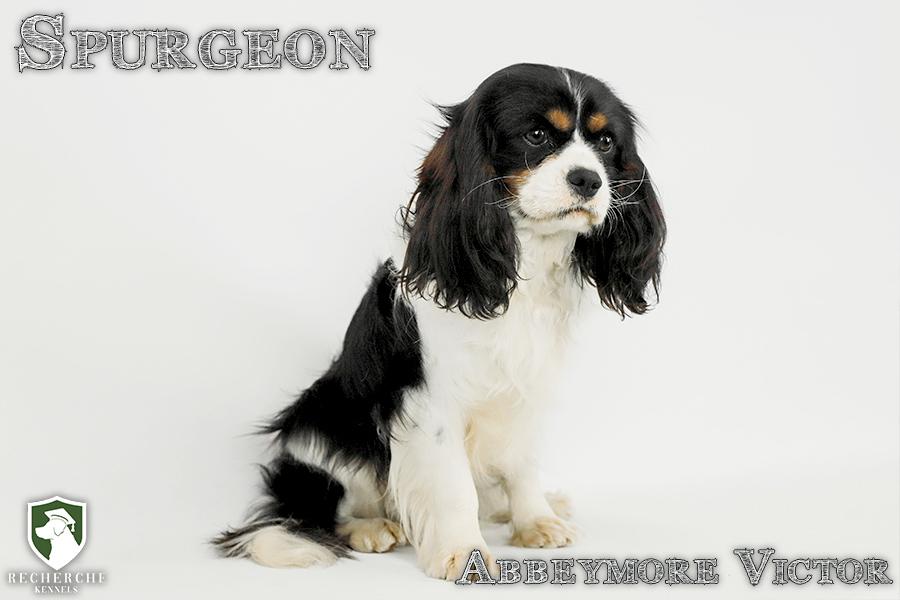 Spurgeon19