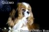 Trixie_Gizmo_Chewy_Mar17_6113