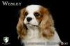 Wesley7